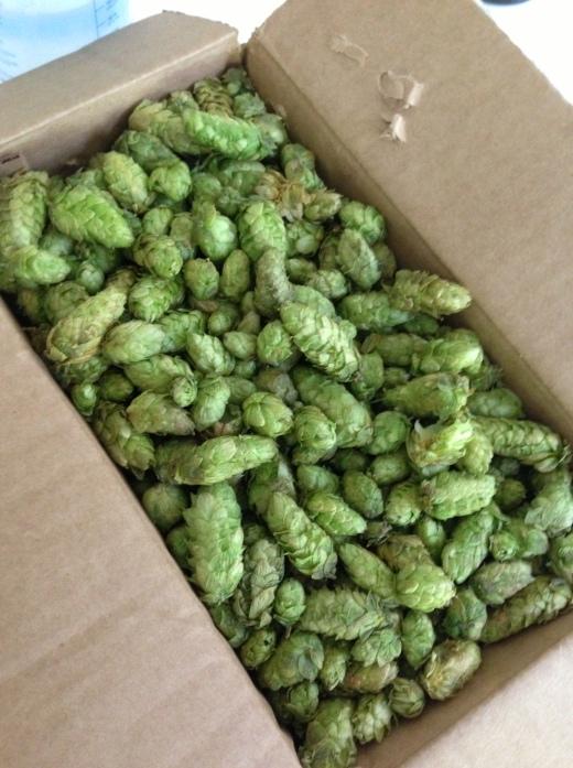 Fresh Simcoe Hops in a Box