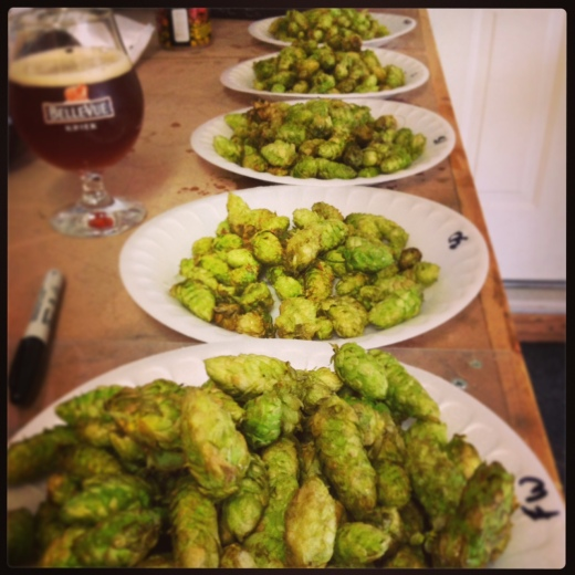 Simcoe Hops Ready to Drop