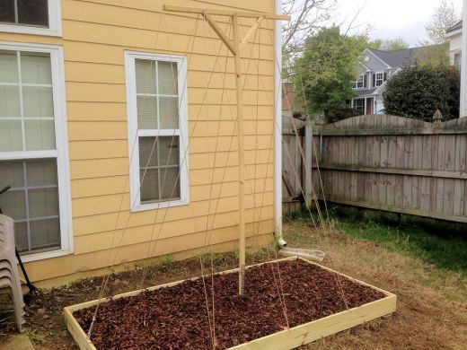 Hob bed planted and new twine added