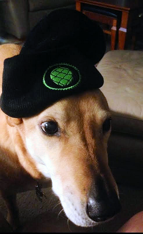 I forgot to take pics on brew day so here's Brew Dog Boo in a hop hat.