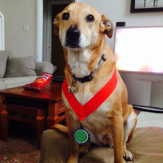 Brew Dog Boo rocking her medal for Synesthesia Pêche